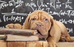 Dicker Hund, Abnehmen, Übergewichtiger Hund, Nassfutter Test