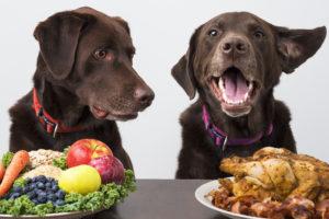 Eine optimales Hundefutter ist entscheidend