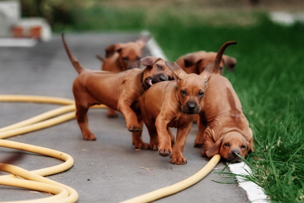 Nassfutter Testsieger Anifit Hundefutter